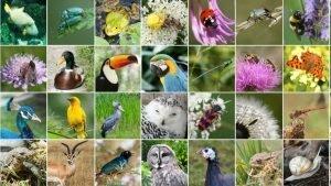 Informe de la ONU sobre declive de la biodiversidad, con Paloma Nuche (Greenpeace) | Actualidad y Empleo Ambiental #12 – 14/5/19