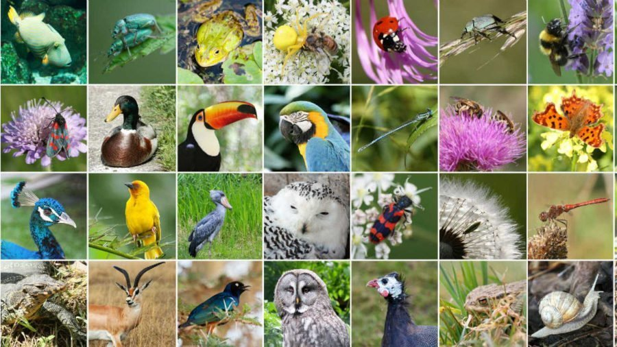 Informe IPBES-ONU sobre declive de la biodiversidad