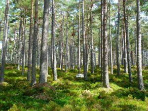 Plantar un billón de árboles para luchar contra el Cambio Climático, con Victor Resco #44