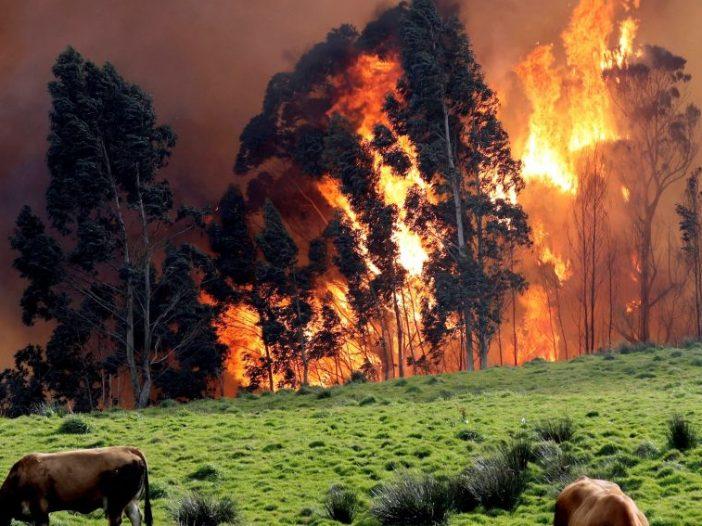 Incendio en Llanes, Asturias